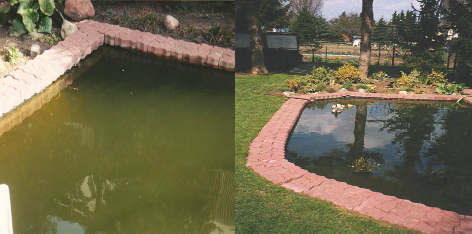 Bacterial mixed cultures - pond & lake restauration